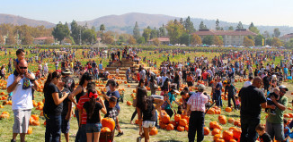 image of pumpkins at pumpkin festival.