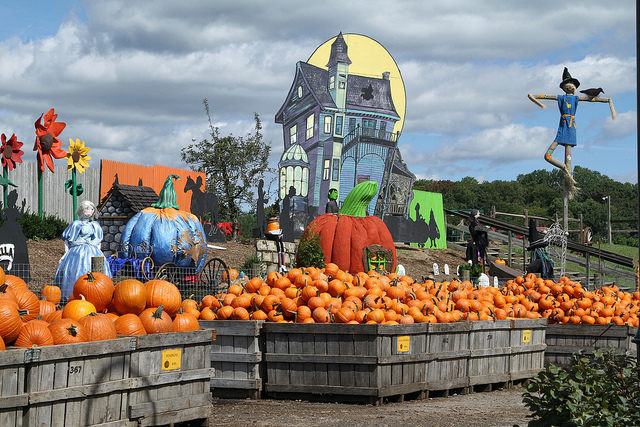 Image of pumpkins at Linvilla Orchards near Philadelphia.