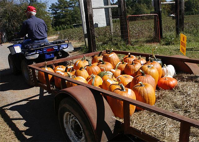 Image of pumpkins on hayrack at Old Baker Farm in Alabama.