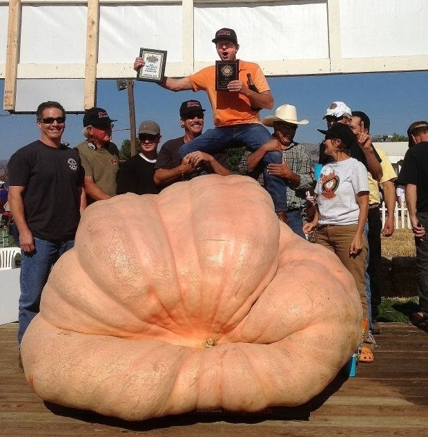 world record pumpkin size