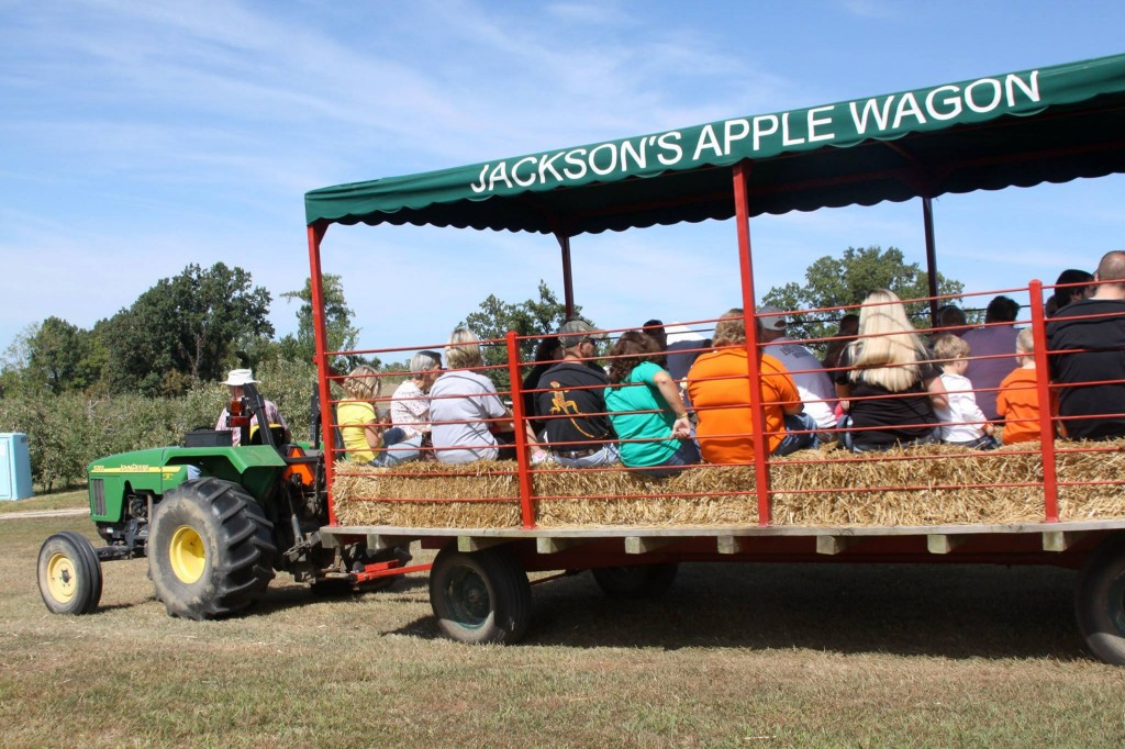jacksonsorchard