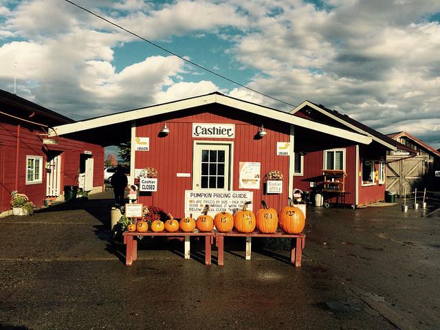 Image of pumpkins at Craven Farm in Snohomish, Washington.
