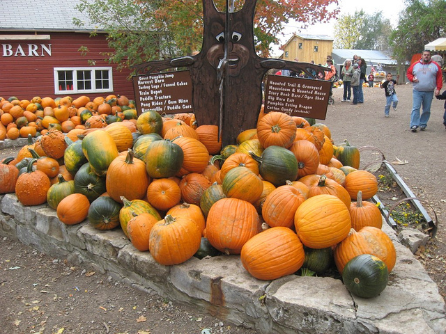 Image of pumpkins at Vala's Pumpkin Patch in Nebraska.