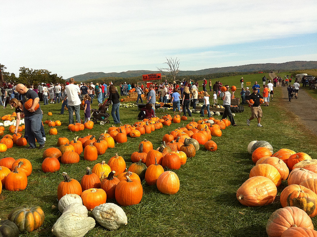 Image of pumpkins and fall festival at Sinkland Farms in Virginia.