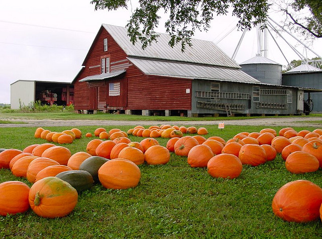 Image of pumpkins in front of barn on North Carolina farm.