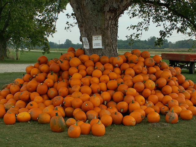 Image of Ohio pumpkins piled against a farm tree.