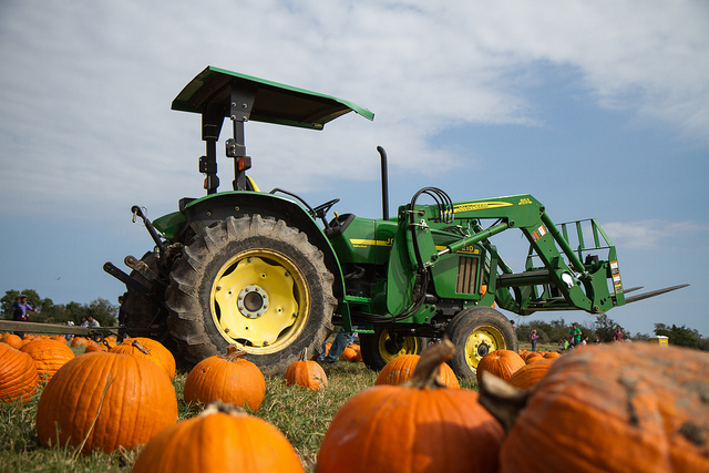 Image of pumpkins and tractor at Dewberry Farms.