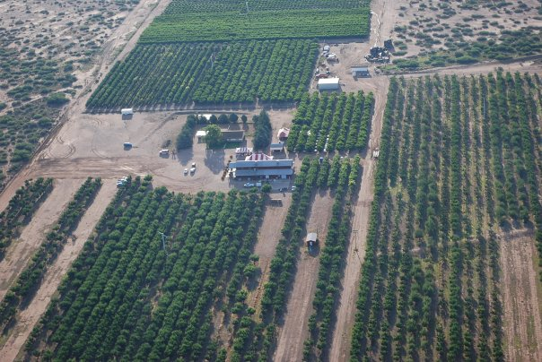 appleanniesorchard